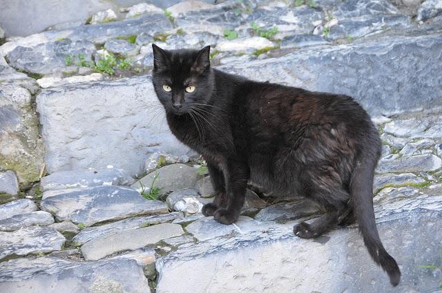 Gatto nero Triora
